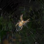 蜘蛛は縁起の良い生き物?何故家の守り神と言われているのか?