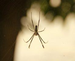 蜘蛛 子供 母親 食べる