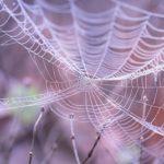 蜘蛛の糸が顔につくのはなぜ?