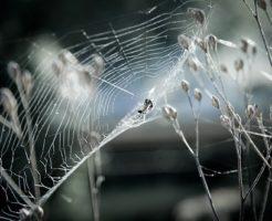 蜘蛛 糸 仕組み 出し方 種類