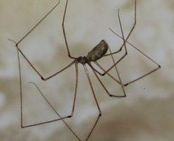 蜘蛛 名前 一覧