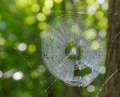 蜘蛛 種類 海外