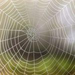 蜘蛛の巣を作らせない、張らせないための予防法とは!?