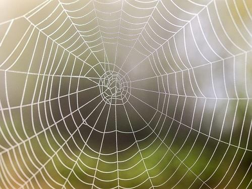 蜘蛛 巣 張らせない 作らない 予防