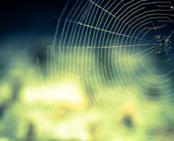 蜘蛛 巣 作り方 張り方 時間