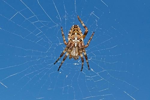 蜘蛛 卵 服