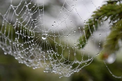 蜘蛛 北海道 家 種類