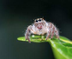 蜘蛛 目 数 位置