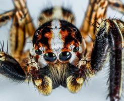 蜘蛛 怖い 心理