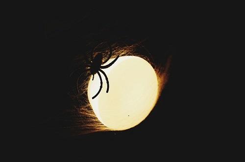 蜘蛛 夢 意味 妊娠 卵