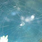 蜘蛛を退治して良い時間って?