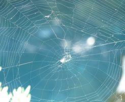 蜘蛛 退治 時間