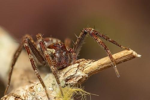 蜘蛛 コーヒー 酔う