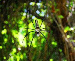 蜘蛛 名前 由来