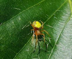蜘蛛 子供 背中