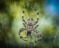 蜘蛛 卵 殺虫剤 駆除