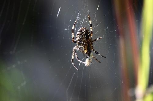 朝 昼 夜 蜘蛛 意味
