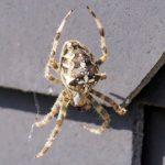 なぜ蜘蛛が怖いのか、その理由