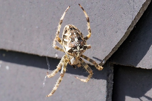 蜘蛛 怖い 理由 なぜ