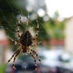 家に出る蜘蛛の子供の駆除方法