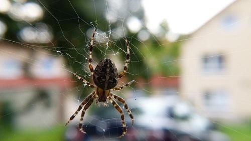 蜘蛛 子供 家 駆除