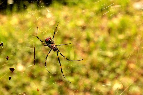 蜘蛛 蟹 祖先 仲間