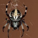 蜘蛛の足の構造や関節の動き方とは!?