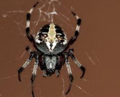 蜘蛛 足 構造 関節 動き