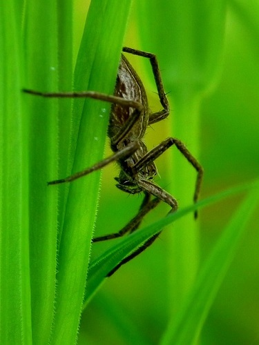 蜘蛛 昆虫 節足動物