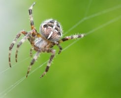 蜘蛛 足 取れる 再生