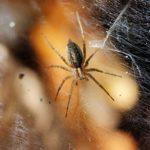 蜘蛛の足の本数は10本!?どこから生えているの?