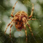 蜘蛛が怖い、蜘蛛がいると眠れない