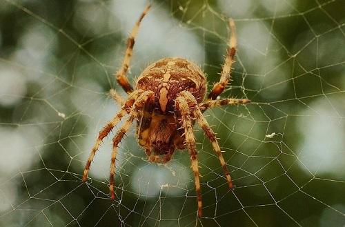 蜘蛛 怖い 眠れない