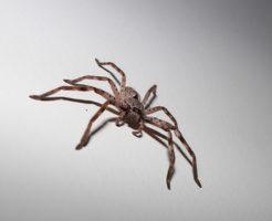 蜘蛛 種類 名前 日本