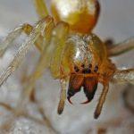 蜘蛛に殺虫剤が効かない理由とは?