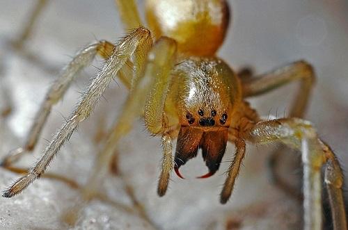 蜘蛛 殺虫剤 効かない 理由