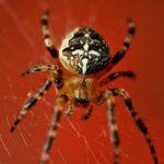 蜘蛛の種類の見分け方とは!?