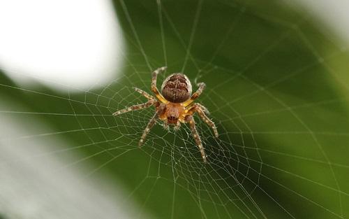 蜘蛛 体 構造 つくり 丸い