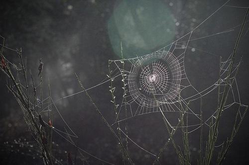 蜘蛛 発生 巣 時間