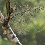 蜘蛛の巣の場所は南?種類はあるの?
