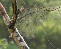 蜘蛛 巣 種類 場所 南