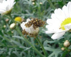 蜘蛛 卵 孵化 成長 期間