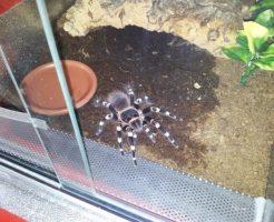 蜘蛛 飼育 えさ 水 難しい