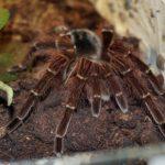 蜘蛛の飼育初心者向きのおすすめの種類とは