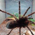 蜘蛛に関する夢占いについて