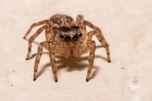 蜘蛛 小さい 白い 透明 跳ねる