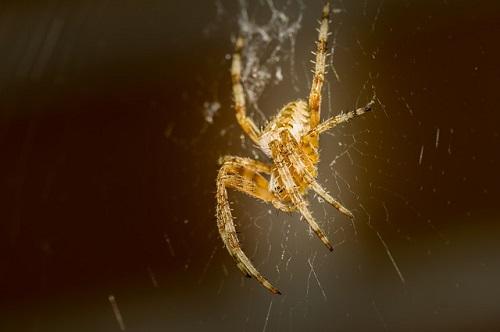 家 部屋 トイレ 蜘蛛 縁起