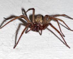 アパート マンション 蜘蛛 原因 対策 種類