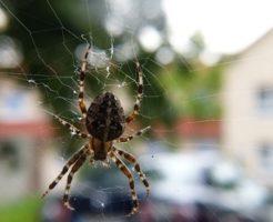 家 マンション アパート 蜘蛛 どこから