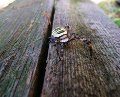 ハロウィン 蜘蛛 なぜ